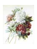 A Bouquet of Red, Pink and White Peonies Giclee Print by Pierre-Joseph Redouté