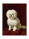 A Poodle Giclee Print by Henriette Ronner-Knip