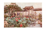 Lotus at Kodaiji Giclee Print by Ella Du Cane