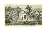 Fetish Banana Trees Near the River Ogowe, Gaboon Giclee Print
