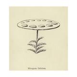 Minspysia Deliciosa Giclee Print by Edward Lear