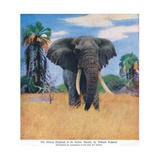 African Elephant in His Native Haunts Giclee Print by Wilhelm Kuhnert