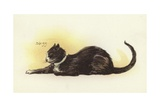 Savoy Cat Giclee Print by Dudley Hardy