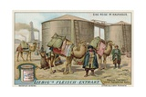 Transporting Naptha by Camel at Baku Giclee Print