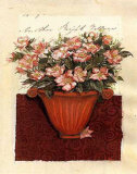 Collage of Camellias Print by Annette Caulder