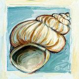 Shell  White Serie I Poster von  Cruz