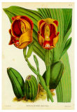 Orquideas II Posters by J. Nugent