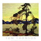 Banks-Kiefer Kunstdrucke von Tom Thomson