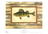 Yellow Perch Kunstdrucke von Zachary Alexander