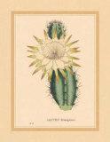 Hexagonus Poster von C. Van Geel