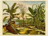 Fruits tropicaux II Affiches par  Barlow