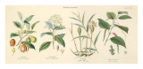 Spice Plants I Prints by William Rhind