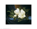 Magnolias Prints by Paul Cordsen