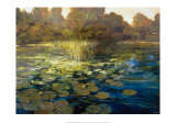 Waterlilies Prints by Philip Craig