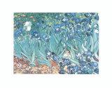 Irises, Saint-Remy, c.1889 Posters by Vincent van Gogh
