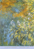 Yellow Iris Posters av Claude Monet