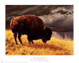 Buffalo Prints by Greg Beecham