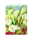 Arum Lilies Prints by Lillian Delevoryas