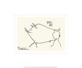 Varken, lichaam van varken met Engelse omschrijving van eetbare gedeelten Zeefdruk van Pablo Picasso