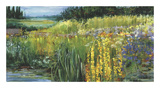 Meadow V Collectable Print by Carol Rowan
