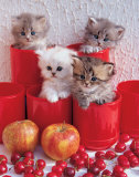 Cherry Cats Poster van Chris Nikolson
