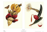 Exotic Fruit Posters