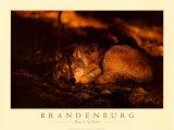 Frieden im Wald Kunstdruck von Jim Brandenburg