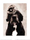 Comme chien et chat Posters par Rachael Hale