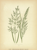 Grasses Poster by Edward Lowe
