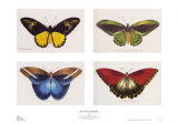 Rain Forest Butterflies Posters by Robert British