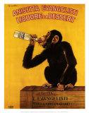 Anissetta Evangelisti, Liquore Da Dessert Affischer