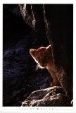 Lion Cub Prints