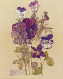 Wild Pansy Plakat af Charles Rennie Mackintosh