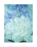 White Rose with Larkspur Reprodukcje autor Georgia O'Keeffe