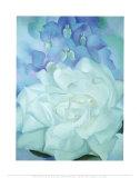 Weiße Rose mit Rittersporn Poster von Georgia O'Keeffe