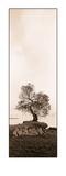 Coast Oak Tree Art by Alan Blaustein