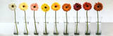 Gerbera Spectrum Poster