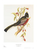 South American Bird I Posters by John Gould
