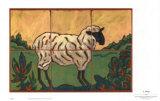 Sheep Prints by Susan Tuckerman