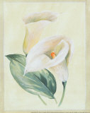Calla Lily I Prints by Paul Hargittai