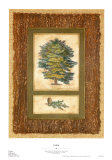 Cedar Prints by Susan Davies