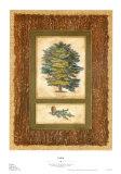 Cedar Prints by Susan Davies