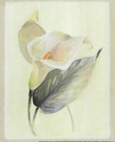 Calla Lily III Prints by Paul Hargittai
