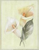 Calla Lily IV Print by Paul Hargittai