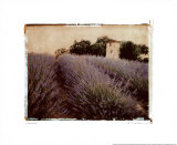 Lavender Prints by Amy Melious