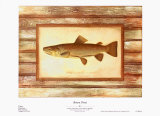 Brown Trout Prints by Zachary Alexander