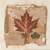 Maple Prints by Pamela Gladding