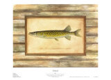 Pickerel Posters by Zachary Alexander