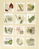 Surrey Garden Fragments Prints by Hewitt