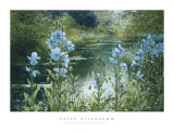 Blue Poppies Print by Peter Ellenshaw